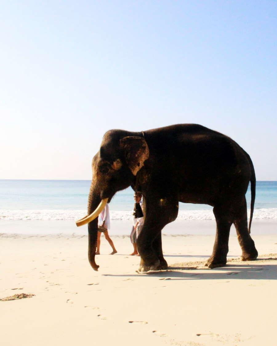 The Ultimate Andaman and Nicobar Guide Header Image